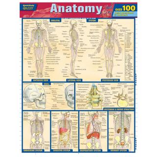 Barcharts Anatomy