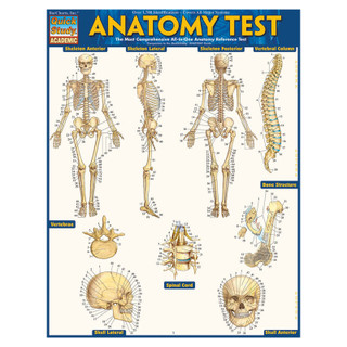 Barcharts Anatomy Test