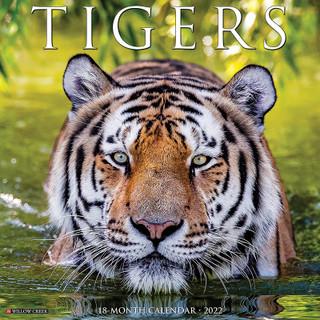 Tigers 2022 Wall Calendar 16 Months