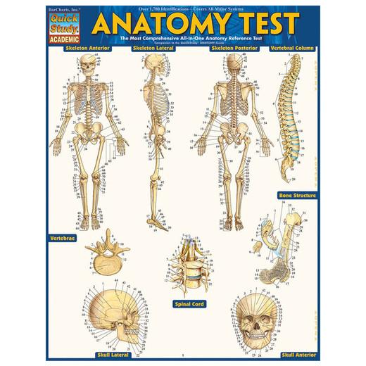 Barcharts Anatomy Test