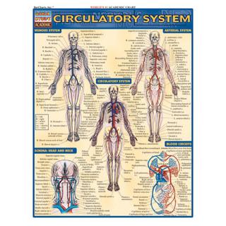 Barcharts Circulatory System