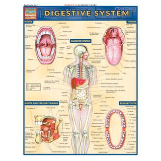 Barcharts Digestive System