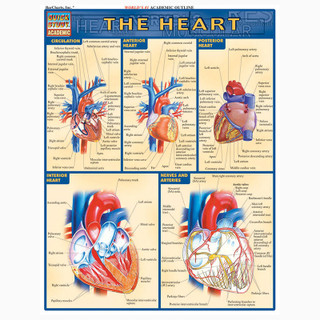 Barcharts The Heart