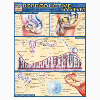 Barcharts Reproductive System