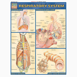 Barcharts Respiratory System
