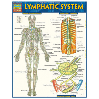 Barcharts Lymphatic System